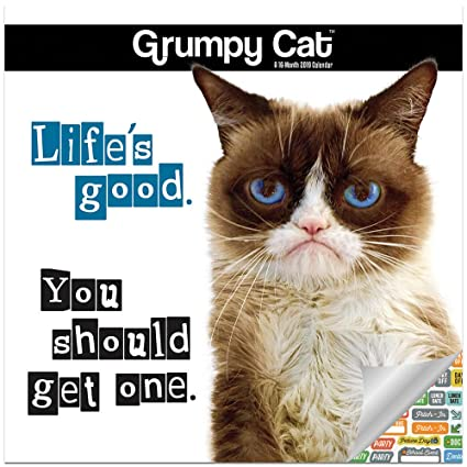 Amazoncom Grumpy Cat Calendar 2019 Set Deluxe 2019 Grumpy Cat