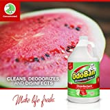 OdoBan Multipurpose Cleaner Concentrate, 1