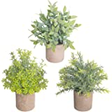 THE BLOOM TIMES Set of 3 Small Artificial Plants in Pots Rustic Plastic Fake Greenery Eucalyptus Rosemary Faux Potted…