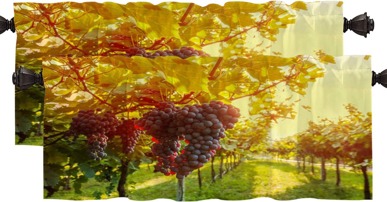 Shrahala Wine Country California Kitchen Valances Half Window Curtain, Sangiovese Grapes in Vineyard Kitchen Valance for Window Ink Printing Kitchen Valances Curtains for Kitchen Decor 52x18 inch