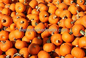 8 round small pumpkins close up birthday edible cake cupcake