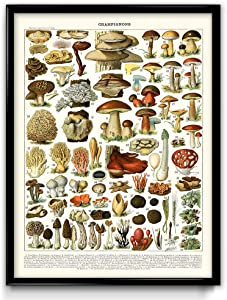 Mushroom Illustration Vintage Print 2 - Mushroom Poster - Mushroom Art - Home Decor - Home Art - Kitchen Art - Botanical Science - Larousse (12W x 16T)