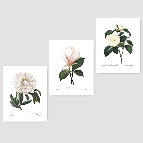 (Set of 3) Botanical Prints (White Home Decor Room Redoute Flower Wall : flower wall art - www.pureclipart.com