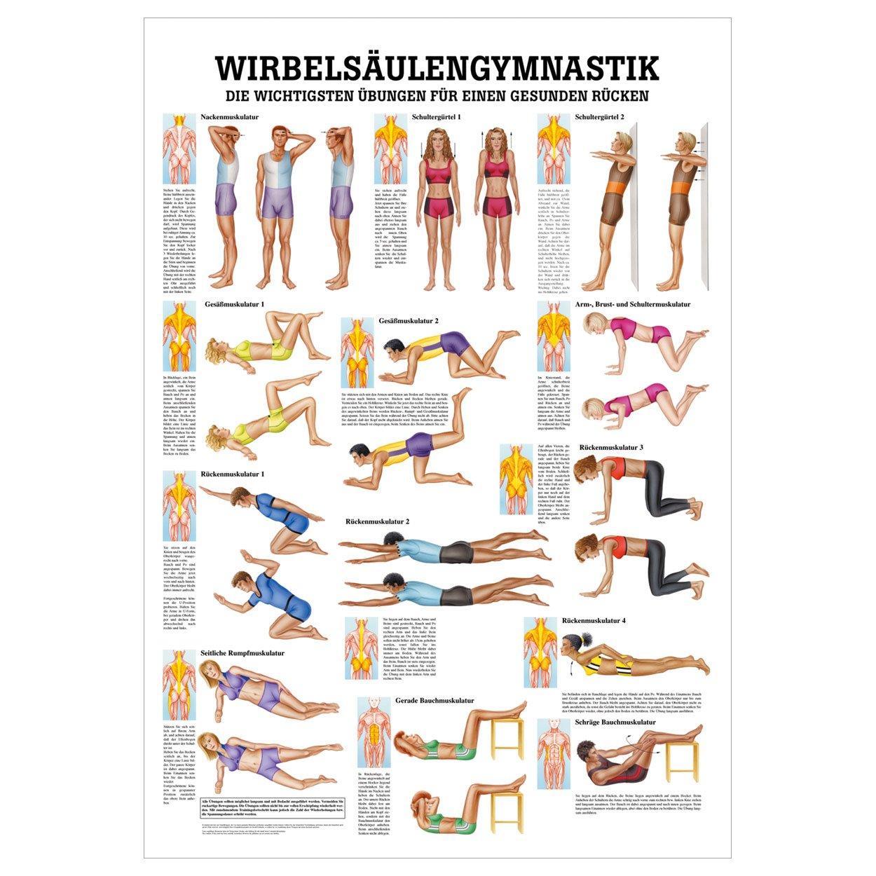 Erfreut Menschliche Rückenmuskulatur Anatomie Bilder - Anatomie Von ...