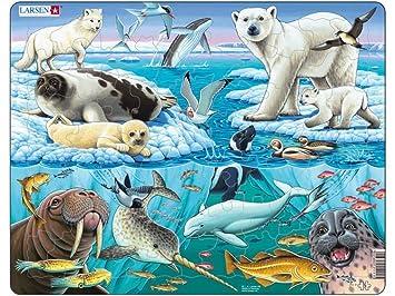 Gemeinsame Larsen Tiere der Arktis: Amazon.de: Spielzeug &VR_28