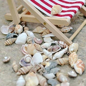 40 piezas de conchas de playa natural en miniatura para decoración de jardín, casa de