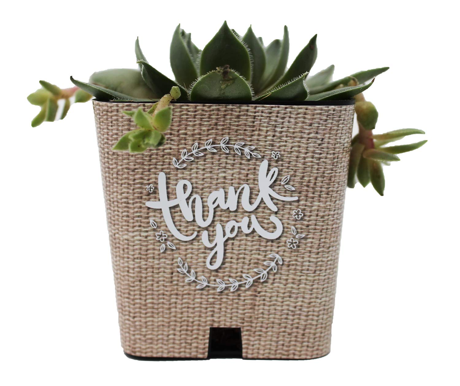 PRODUCT80 Burlap Print Succulent Wraps Wedding Favors for 2'' Pots | Baby Shower, Bridal, Engagement Party | Peel and Stick Stickers | Does NOT Include Succulents. (100, Burlap Thank You Wreath)