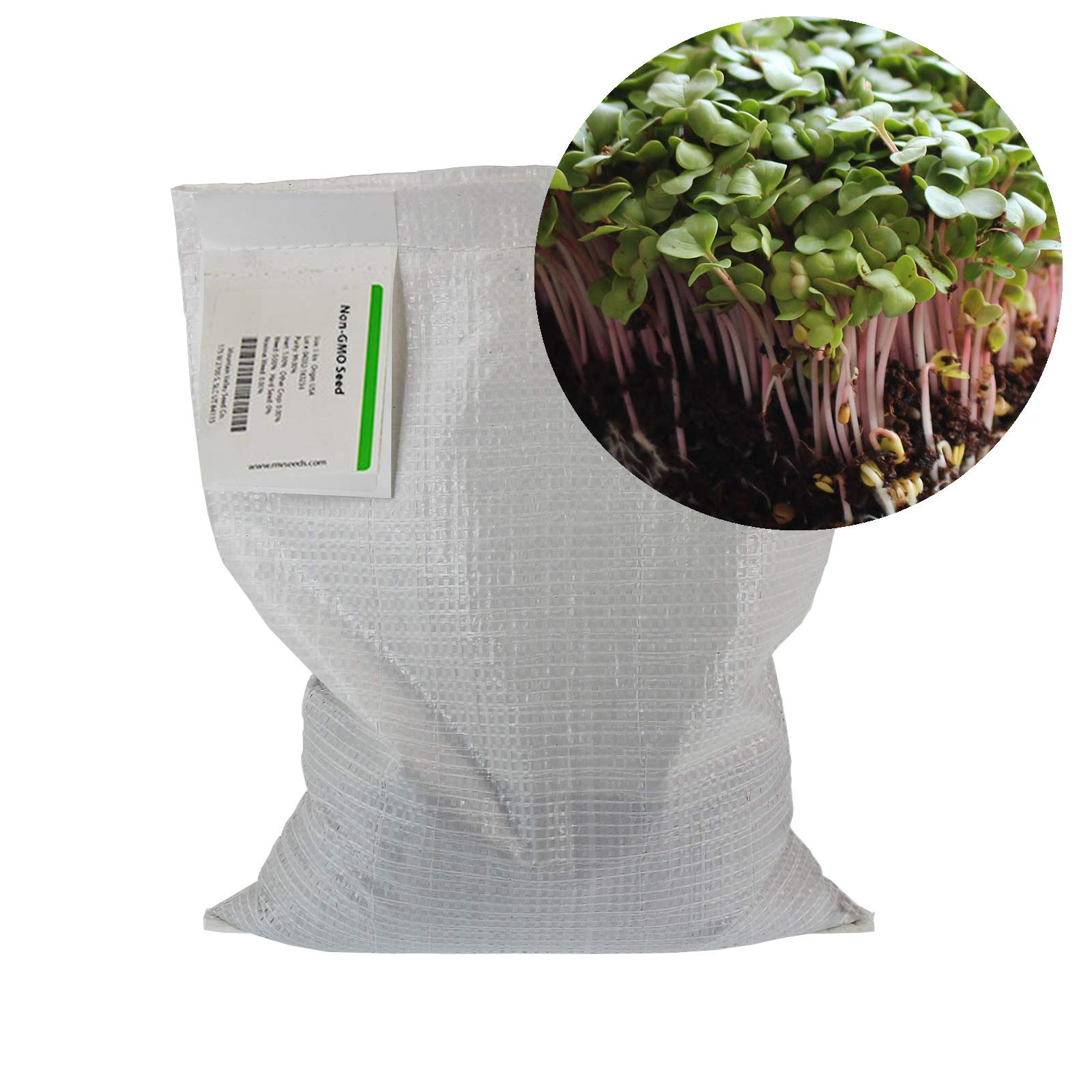 Radish Sprouting Seed - Red Arrow Variety - 5 Lb Bulk Seed - Heirloom Radish Sprouts - Non-GMO Sprouting and Micro Radishes