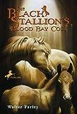 Black Stallion's Blood Bay Colt