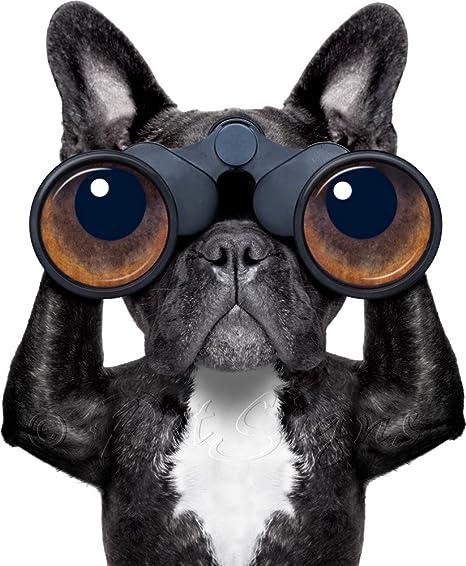 Petsigns Autoaufkleber Franzosische Bulldogge Lustig