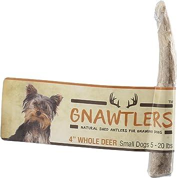 Amazon.com: gnawtlers – PREMIUM Ciervo para perros ...