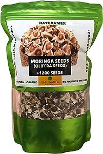 NaturaMex Moringa OLEIFERA Seeds 1200+ Semillas de Moringa Fresh & Natural 100% No GMO, Product of Mexico