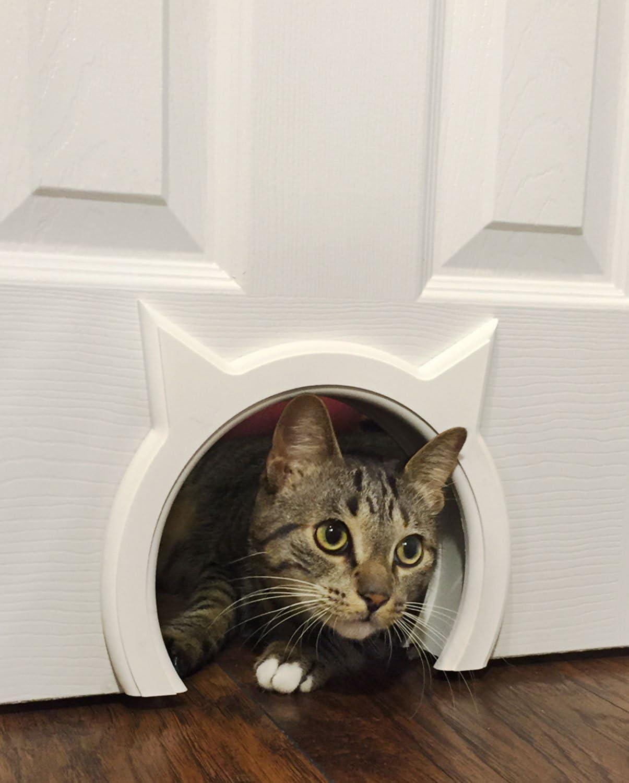 The Kitty Pass Interior Cat Door Hidden Litter Box