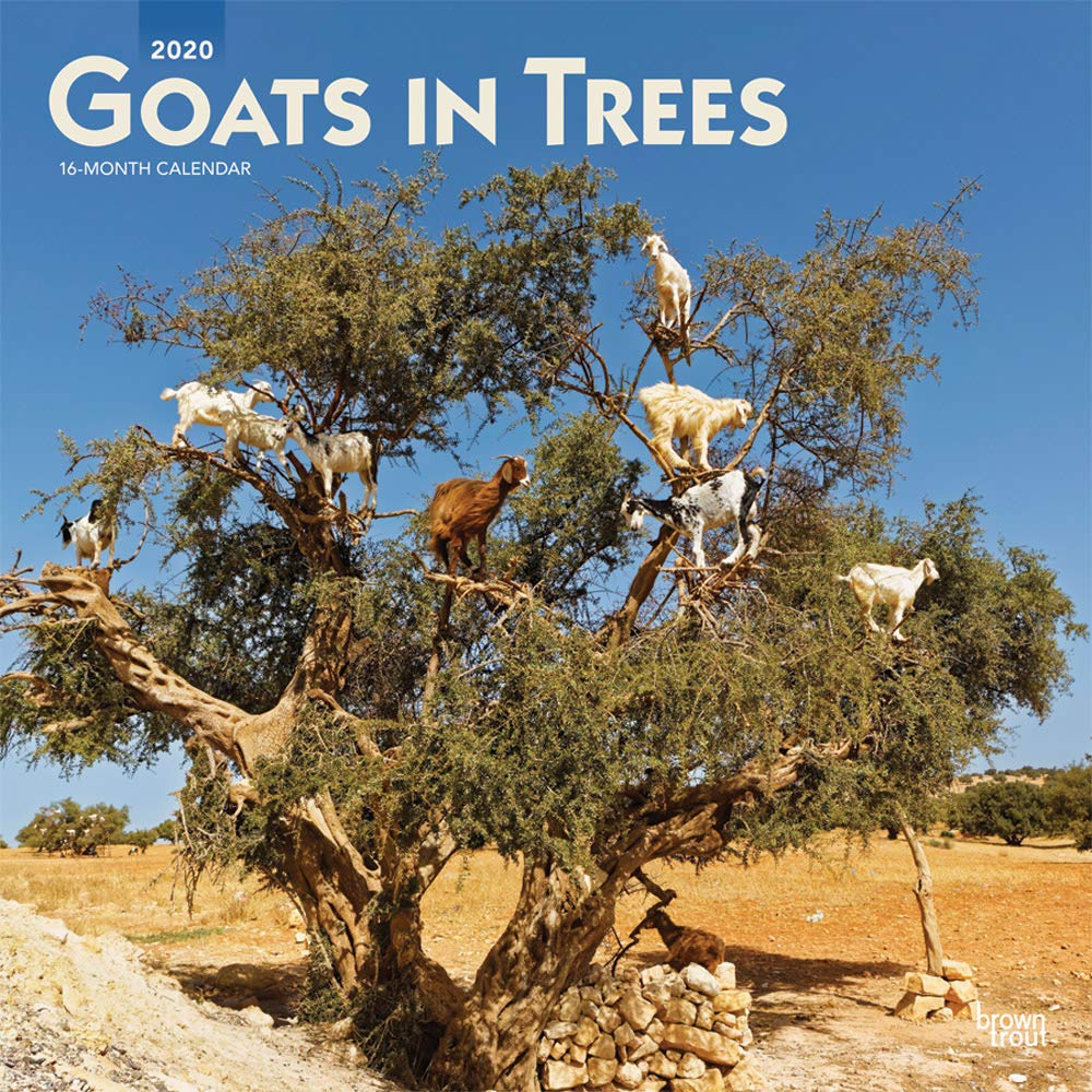 Goats In Trees Calendar 2020 Goats in Trees 2020 12 x 12 Inch Monthly Square Wall Calendar