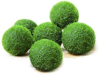 Nano Luffy Marimo Moss Balls