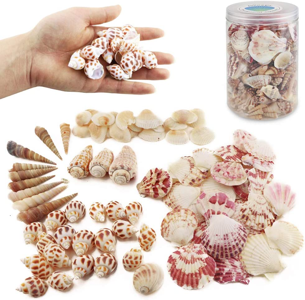 Weoxpr 200pcs Sea Shells Mixed Ocean Beach Seashells, Various Sizes Natural Seashells for Fish Tank, Home Decorations, Beach Theme Party, Candle Making, Wedding Decor, DIY Crafts, Fish Tan