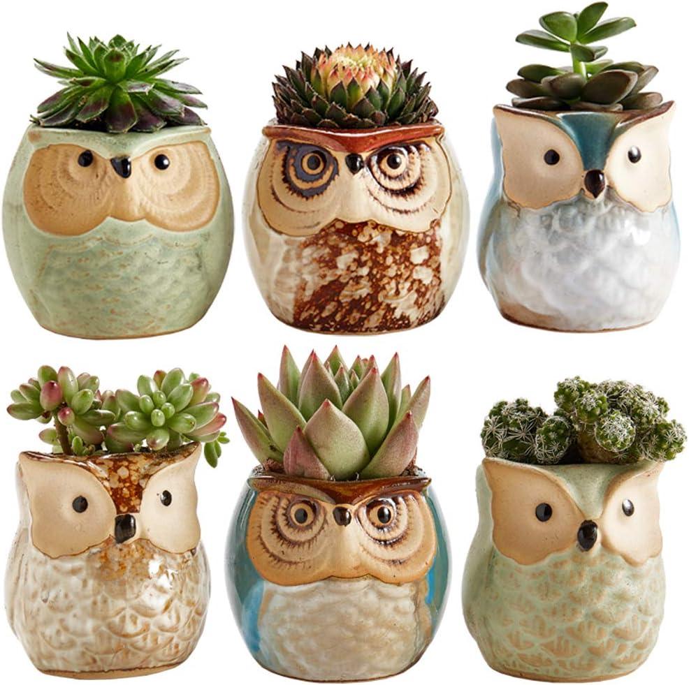 Amazon Com Sun E 2 5 Inch Owl Pot Ceramic Flowing Glaze Base Serial Set Succulent Plant Pot Cactus Plant Pot Flower Pot Container Planter Bonsai Pots With A Hole Idea 6 In Set Kitchen