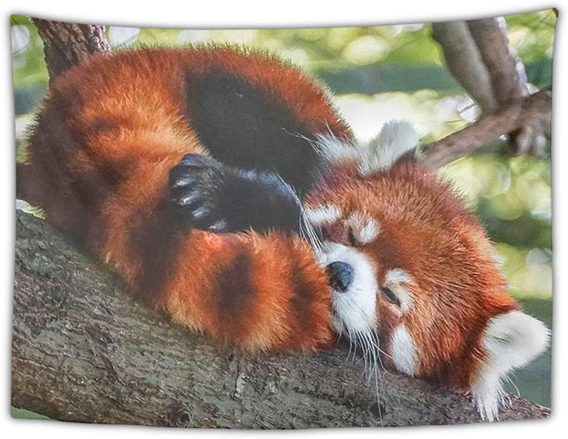 NiYoung Fashion Multi-Purpose Tapestry Wall Tapestry Wall Hanging Tapestries with Sleeping Red Panda for Living Room Bedroom Dorm Home Decor, 60 x 90 Inches