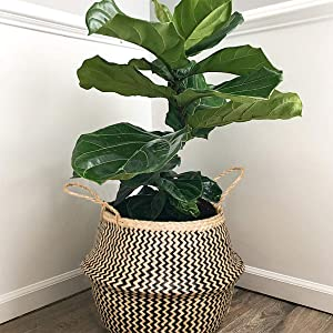 Natural Craft Seagrass Belly Basket Zigzag Black (Medium) for Storage, Laundry, Picnic and Woven Straw Beach Bag - Plant Pots Cover Indoor Decorative (Plush Criss-Cross Seagrass Black)
