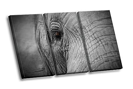 85ae8f6e8d1 Amazon.com  Elephant Eye with Eylashes Close-up Photo Multi-panel ...