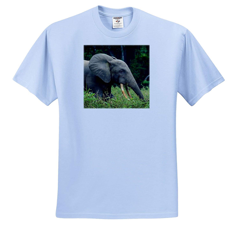 - Adult T-Shirt XL 3dRose Danita Delimont Elephants ts/_310398 Republic of The Congo African Forest Elephant
