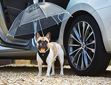 Transparente Paraguas de Perro / Poncho de lluvia, COUTUDI Mascota Accesorios de lluvia con Ultra