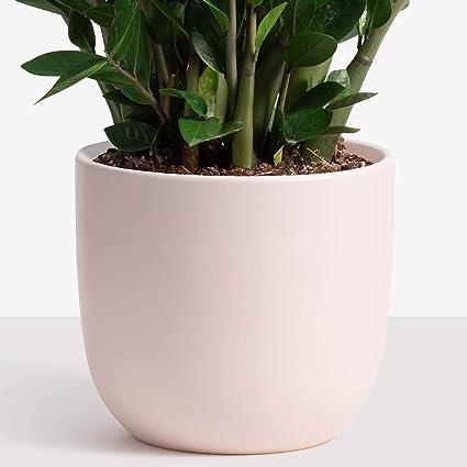 Peach pot
