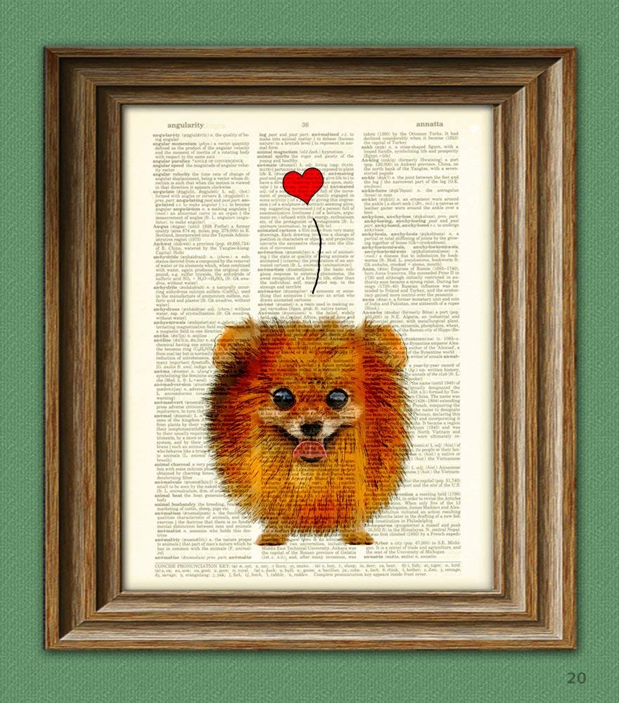 Lil Fluffy Pomeranian Pom With Heart Love Dog Illustration Beautifully Upcycled Dictionary Page Book Art Print 1