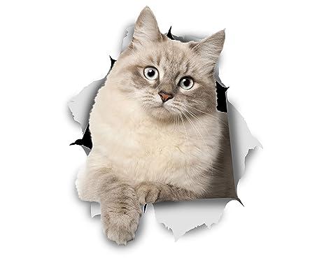 Winston & Bear Adhesivos de gato 3D - Pack 2 - gatito siberiano Stickers para pared