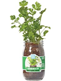 Back to the Roots Garden in A Jar, Cilantro (Packaging May Vary)