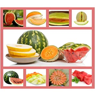 Everwilde Farms Mylar Seed Packet 50 Hales Best Jumbo Melon Seeds