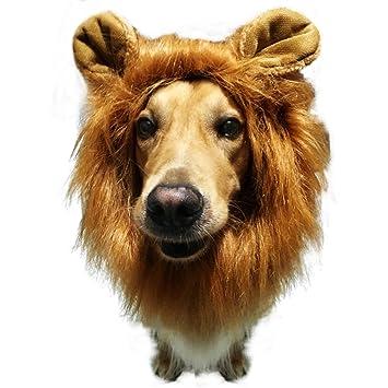 mewtogo León Mane peluca disfraz de gato divertido perro – gato perro turned sombrero