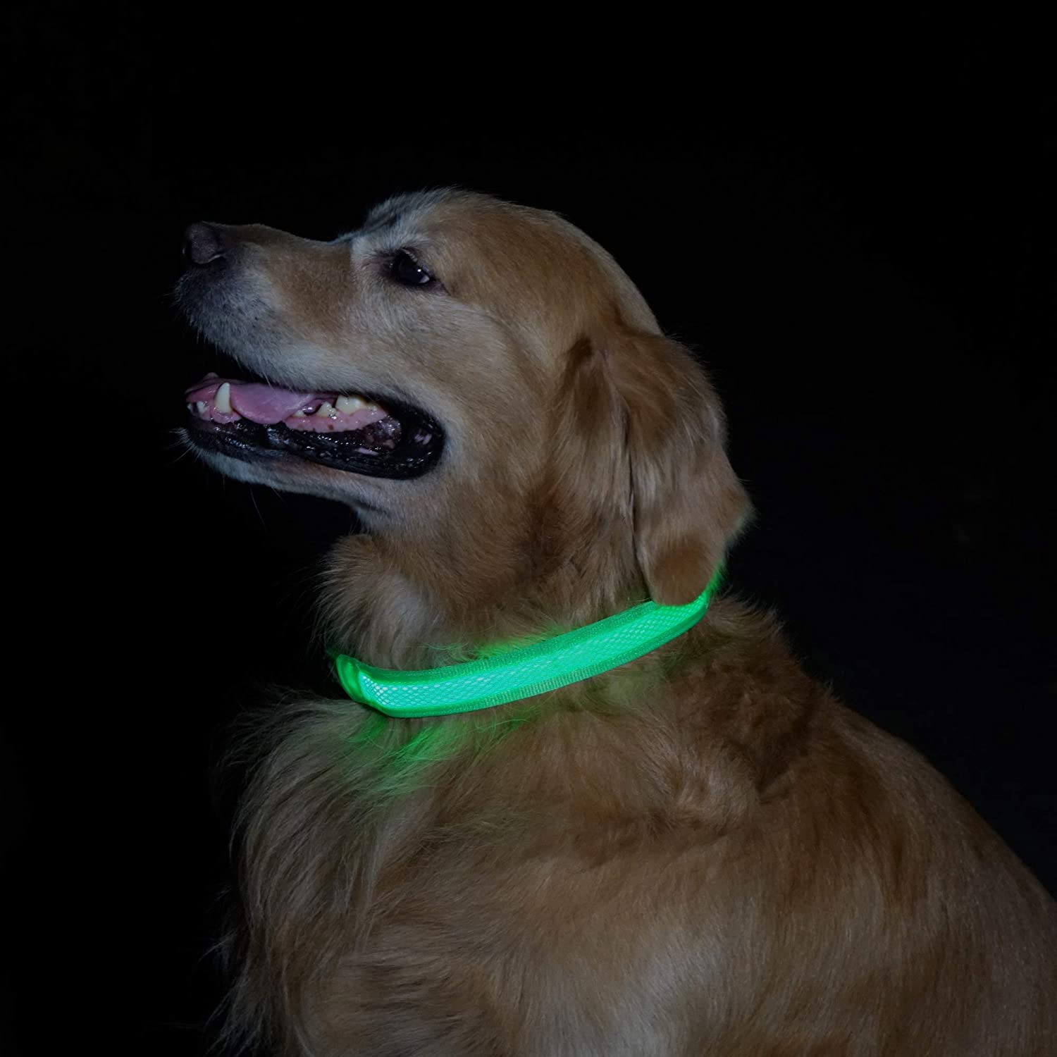 MATCHY2U Rechargeable Led Dog Collar - Soft and Adjustable Waterproof Light up Safety, Makes Your Dog Visible and Safe : Kitchen & Dining