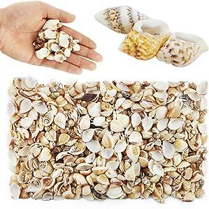 Weoxpr 1000pcs Mini Sea Shells Mixed Ocean Beach Seashells Various Sizes Natural Seashells Starfish for Fish Tank, Home Decorations, Beach Theme Party, Candle Making, Wedding Decor, DIY Crafts