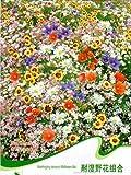 amazing-négoce élégant 1 Sachet de 200 graines de mélange de graines de de semences de tolérance fleurs sauvages