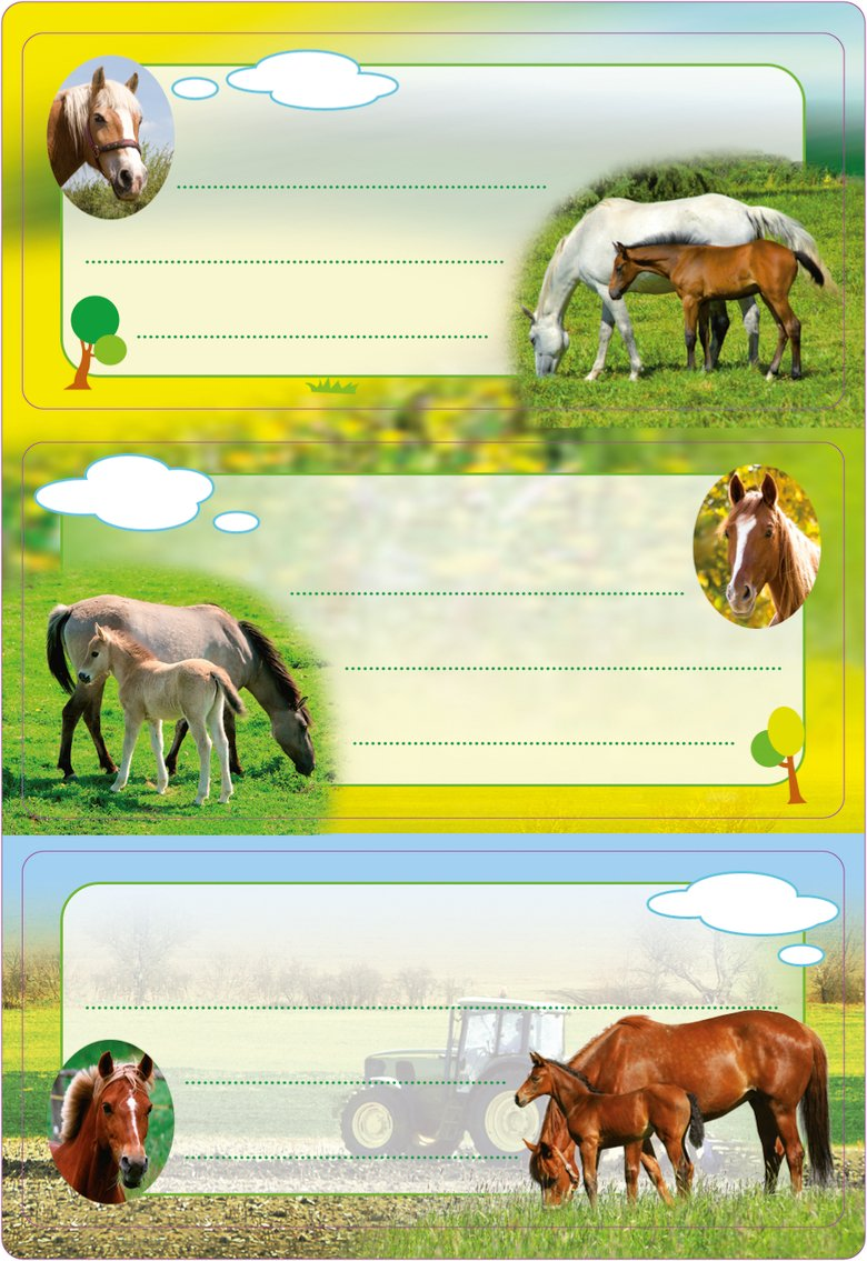HERMA 5568Etichette Nome Quaderno per la scuola, motivo: Cavalli, formato 7,6x 3,5cm, con brillantini, contenuto confezione: 6Etichette