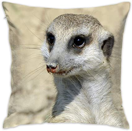 Animal Meerkat Decorative Throw Pillow Cover Without Inserts Cushion Case For Home Sofa Bedroom Car Chair House Party Indoor Outdoor 45 X 45 Cm Amazon Co Uk Kitchen Home