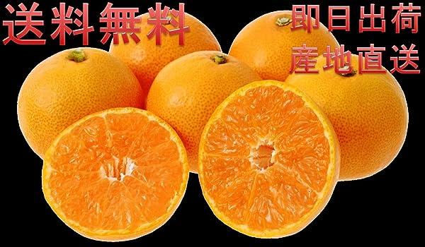 和歌山 みかん 高糖度 で 最高級 の 味 (訳あり) 当日もぎたてを出荷します 送料無料 (3キロ) のし対応致します