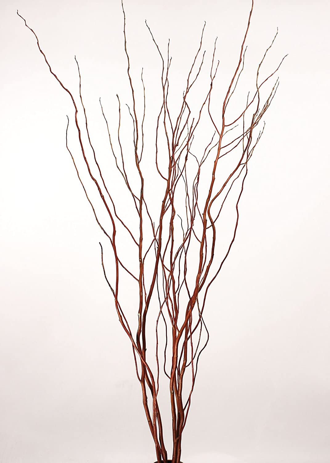 Amazon.com: Green Floral Crafts Curly Willow Branches (Bunch of 8 ...