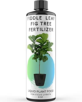 Fiddle Leaf Fig Tree Plant Fertilizer for Fig Trees