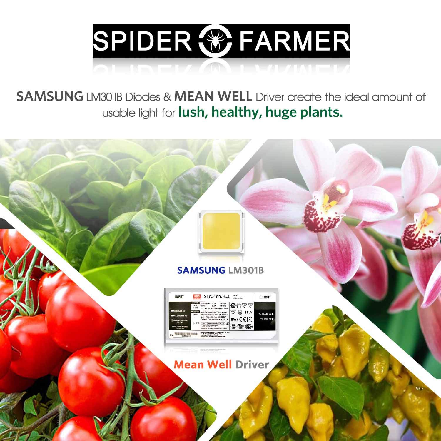606pcs LEDs High Efficiency NO Noise Spider Farmer SF 2000 LED Grow Light with SAMSUNG Chips /& Dimmable Mean Well Driver Sunlike Full Spectrum 3000K 5000K 660nm IR for Indoor Plants Veg and Flower
