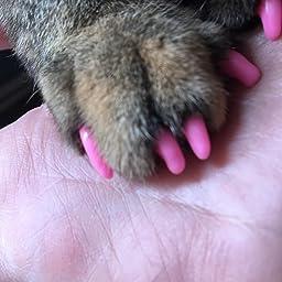 Amazon Tikdok 100個 ソフトペットキャットネイル キャップ 猫足グルーミングネイル爪キャップ 5種類のカバー 5枚 接着剤 M Tikdok 爪切り ネイルケア 通販