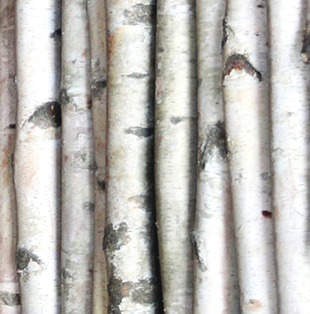 Wilson Enterprises White Birch Poles, Natural, Kiln Dried, Home Decor Birch (5, 6 ft Long x 1-1.5 inch Diameter) by Wilson Enterprises