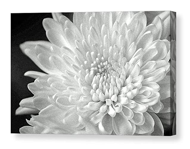 Amazon com: Dramatic Black and White Large CANVAS Art Print Flower