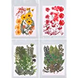 PORTOWN 74 Pcs Natural Dried Pressed Flowers and Green Leaves, 4Pack Colorful Daisies & Leaves Mixed Presses Leaves…