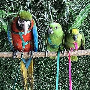 Gorge-buy Parrot Traction Strap Outdoor Rope Pet Leash Ajustable Bird Harness for Cockatiel(Random Color) 95