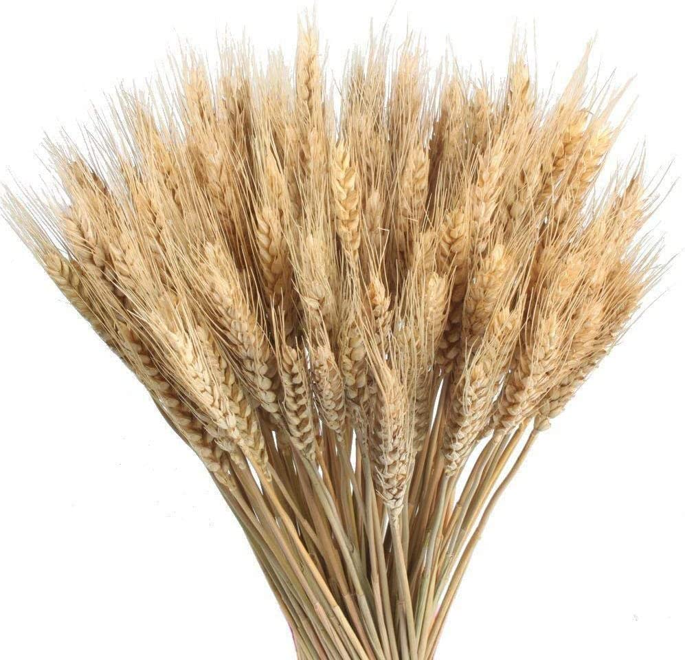 Wedding Decorations Dried Wheat Sheaves,100pcs Natural Wheat Bouquet Bunch Stalk Bundle,Bride and Groom Holding Flowers,DIY Home Kitchen Table Wedding Centerpieces