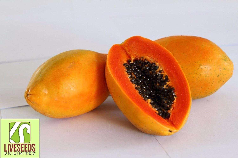 """Liveseeds World No1 Papaya/"""" Red Winner/"""" 20 Seeds"""
