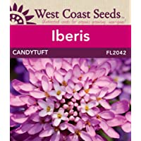 Iberis Seeds - Candytuft