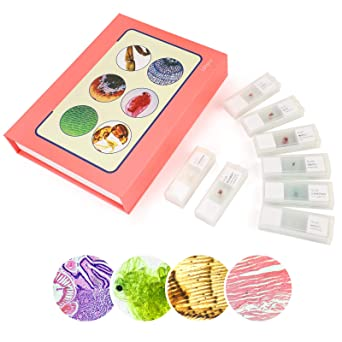 100Pcs Microscope Slides Prepared Microscope Slide Set with Plastic Storage Box for Kids Students Home School Science Learning